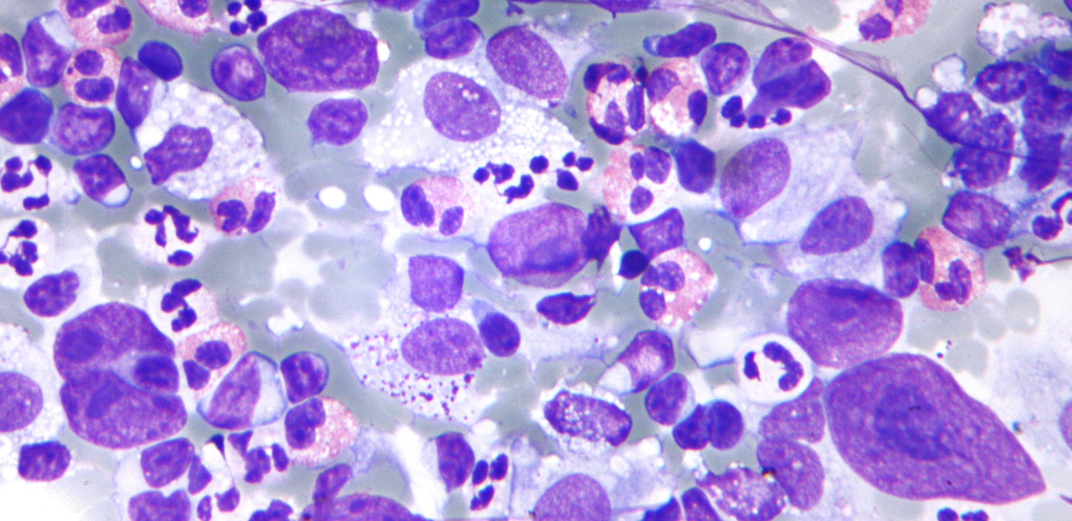 Information About Cytology